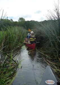 Braintree Canoeing Club - River Waveney